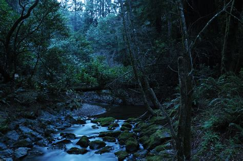 Redwood forest at night   California, February 2011