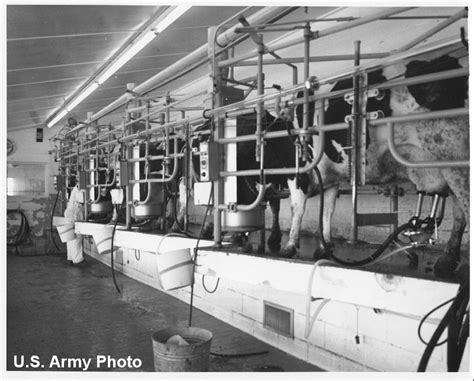 The Nebraska Experiment That Put Cows In An Underground Bunker