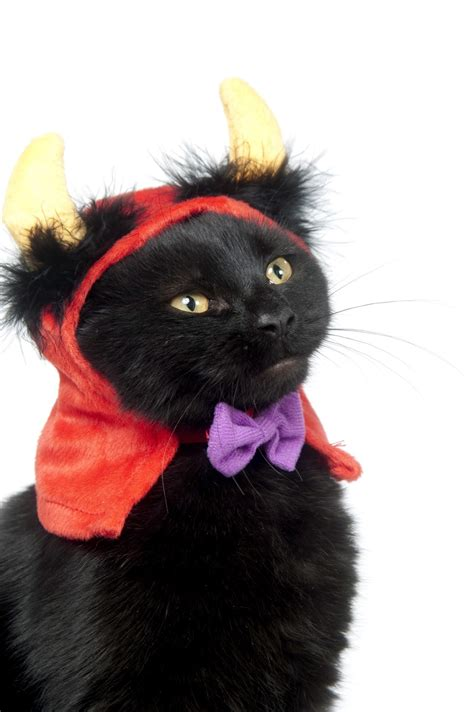 13 Halloween costume ideas for your cat's personality