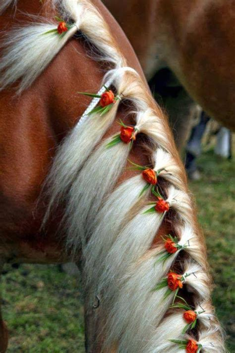 Cool Hairstyles For Horses - XciteFun