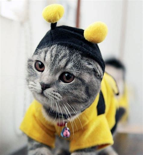 7 Hilarious Cat Costumes for Halloween - Petswelcome