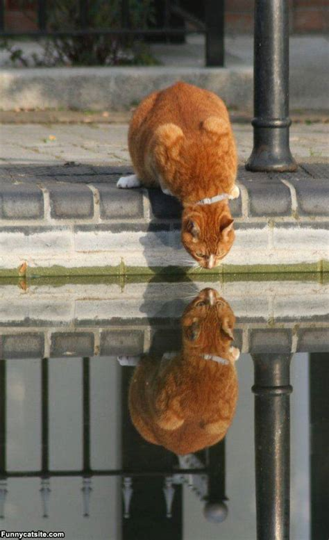 Animals Reflection in The Water - XciteFun