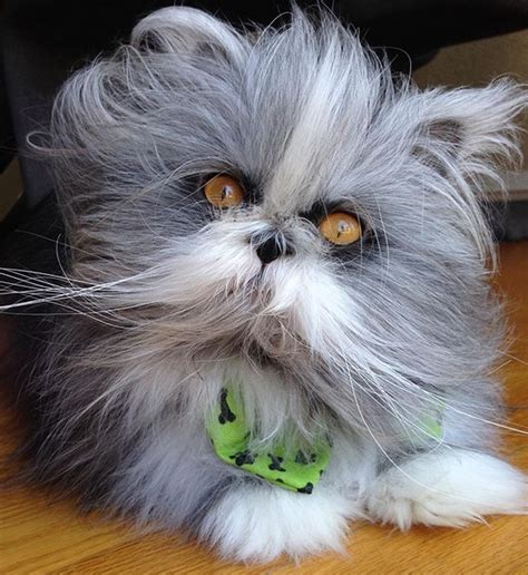 """Meet The Incredibly Fluffy """"Werewolf Cat"""" With"""