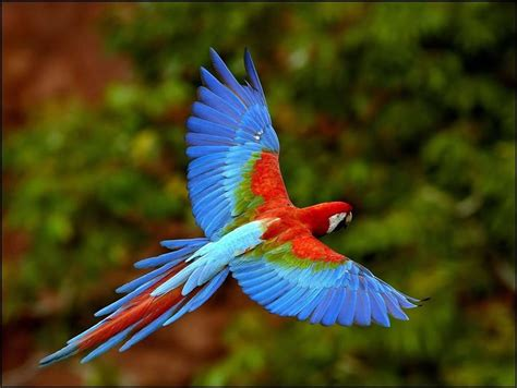 Parrots Flying In The Rainforest - XciteFun